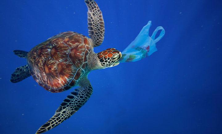 Bilderesultater for sea turtle plastic